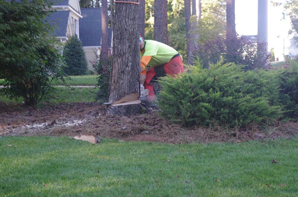 Tree Removal Cost in Chattanooga TN