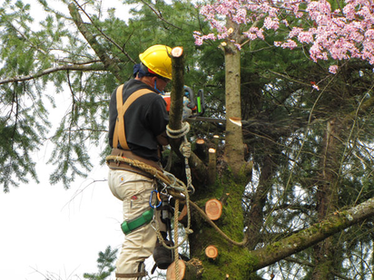 Tree Trimming vs Tree Removal Chattanooga