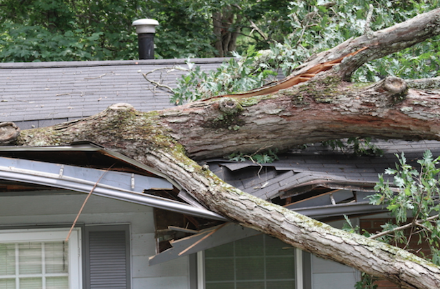 Nabor's Tree Service Chattanooga ​1132 Market St #FC-3 Chattanooga, TN 37402 - Emergency Tree Service