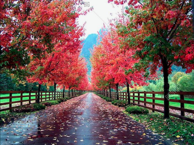 Nabor's Tree Service Chattanooga 1132 Market St #FC-3, Chattanooga, TN 37402 | Lined Driveway in Autumn