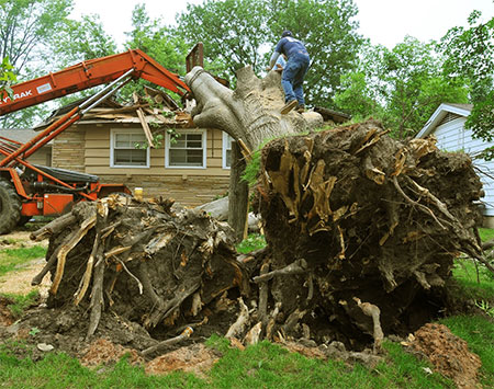 Stump Removal in Chattanooga